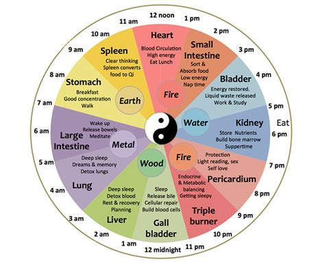 Meet The Chinese Body Clock: Is This Why You're Waking Up ...