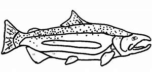 hd wallpapers king salmon coloring page