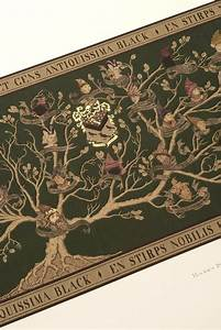 This Is How They Made The Black Family Tree In The  U0026 39 Harry