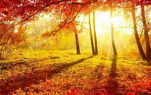 autumn sunrise | Fall/Autumn Wallpapers | Pinterest