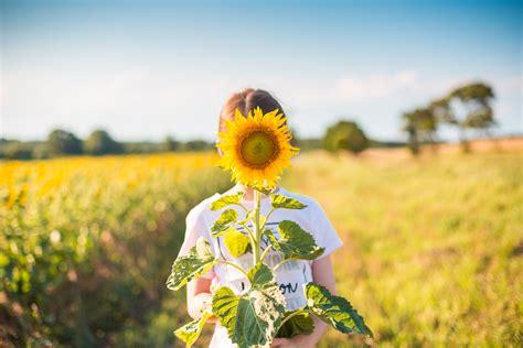 Hipster Desktop Wallpaper Sunflower Field