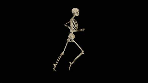 Skeleton Animated Wallpaper - xray running skeleton motion seamless loop stock