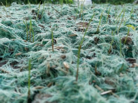 hydro seed grass residential hydro seeding advanced erosion solutions
