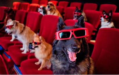 Cinema Pets Pawsome Outdoor Paws Dog July