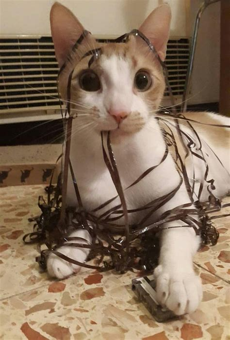 funny cat covered  tape luvbat