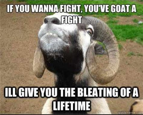 Funny Fight Memes - 35 most funny goat meme pictures and images