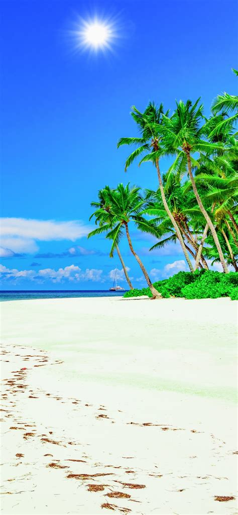 wallpaper beach palm trees blue sky summer tropical