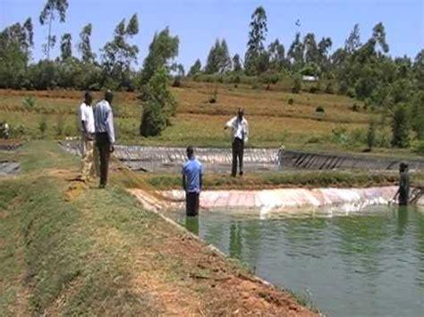 preparing  fish sampling  mwitoko fish farm  vihiga