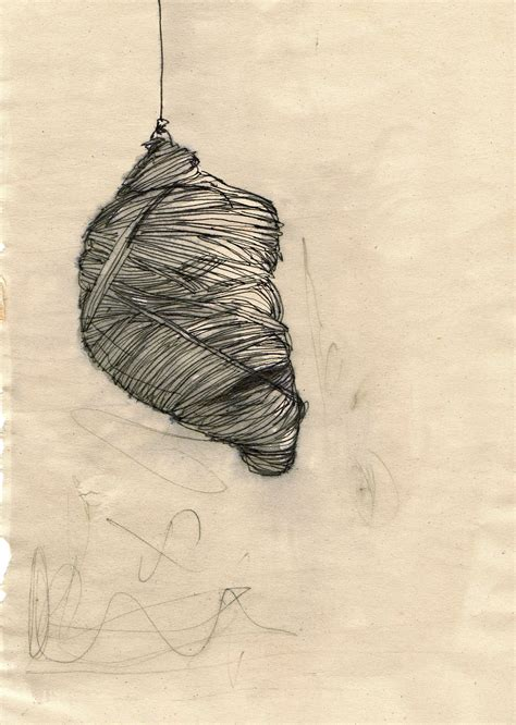manon ferra cocoon drawing nature art butterfly