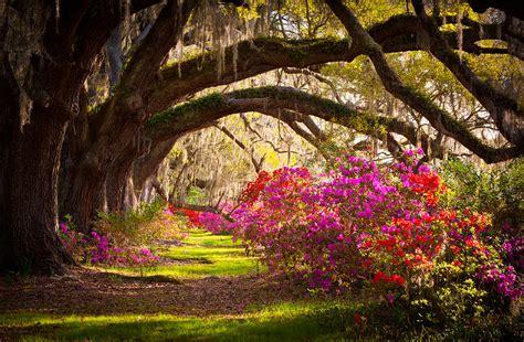 magnolia plantation gardens charleston sc charleston sc magnolia plantation gardens memory