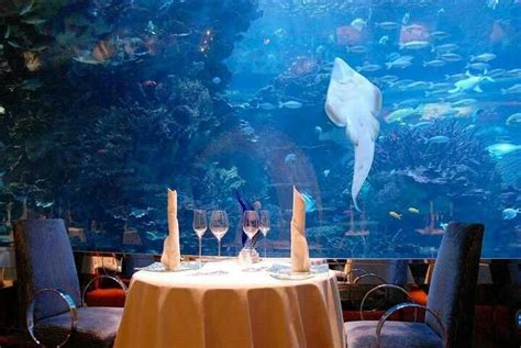 aquarium hotel in dubai the world s catalog of ideas