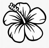 Coloring Flower Hibiscus Clipart Clipartkey sketch template
