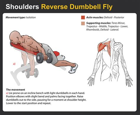 pec deck flyes target muscles dumbbell fly