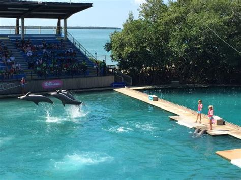 boys picture of miami seaquarium key biscayne tripadvisor