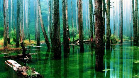rainforest hd landscape hd desktop wallpapers  hd