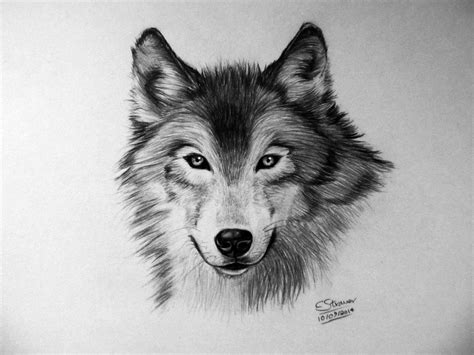 Wolf Drawing By Lethalchris On Deviantart