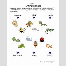 Classification Worksheets  Have Fun Teaching