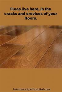 fleas that are on your cat or dog lay eggs the eggs fall With how to kill fleas on wood floors
