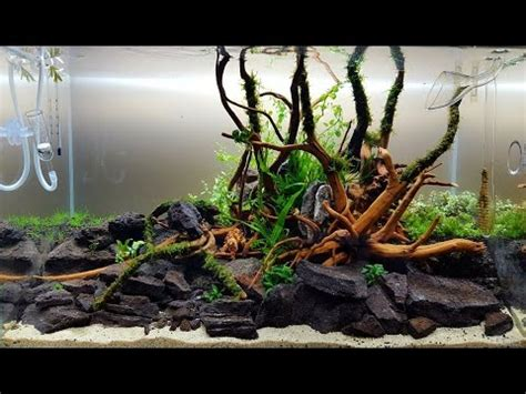 Aquascape Wood by Aquascape Ada Style Cube Garden 60p Bank Of River
