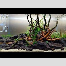 """Aquascape Ada Cube Garden 60p  Bank Of River """"ada Sansui"""