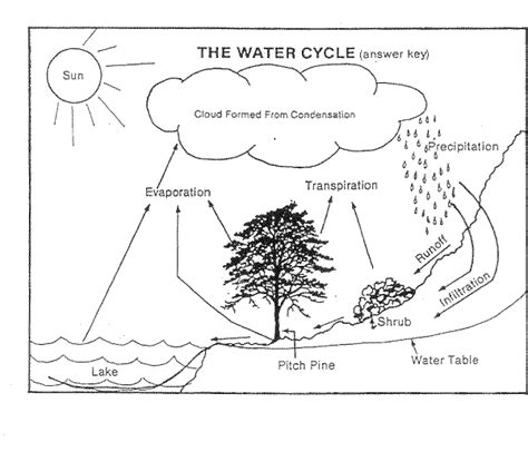 water cycle worksheet google search school stuff