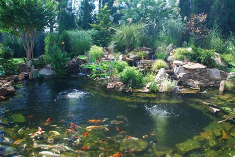 pictures of ponds splendor koi pond koi ponds require diligence