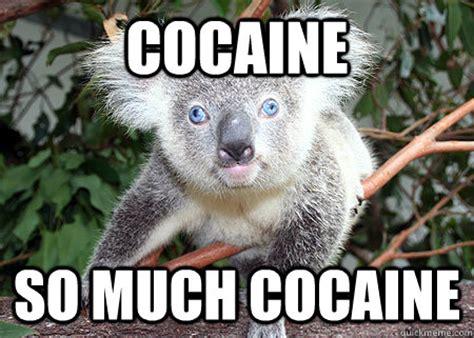 So Much Cocaine Meme - cocaine so much cocaine cocaine koala quickmeme