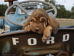 What Up Dog  Does Owning A Ford Determine What Pets You