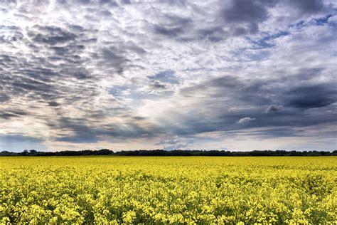 picture crops rural sky soil summer sun