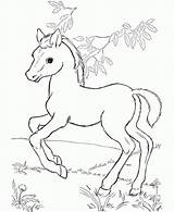 Horse Coloring Pages Printable Baby Fun Forget Supplies Don sketch template