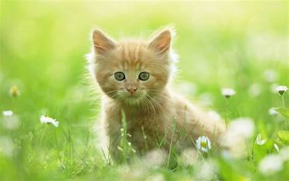 Kitten Wallpapers 1200
