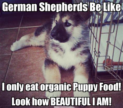 Funny German Shepherd Memes - i only eat bacon socially by gina barberi like success