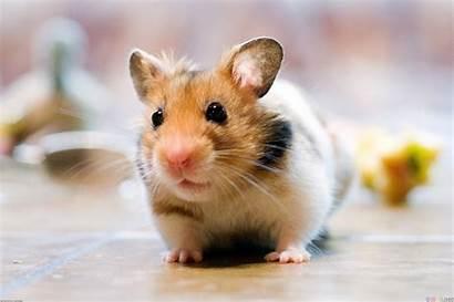 Pets Incredibly Animals Pet Bloglet