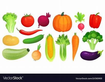 Vegetables Cartoon Veggies Vegan Fresh Vegetable Vectorstock