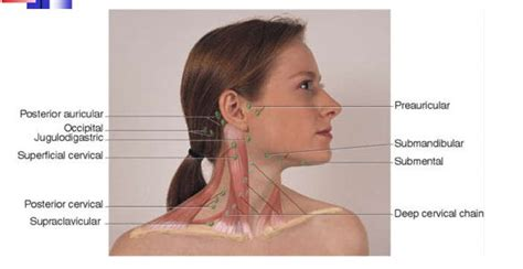 swollen  neck glands google search allergies
