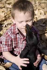 Haustiere Für Kinder : haustiere f r kinder freshdads v ter helden idole ~ Orissabook.com Haus und Dekorationen