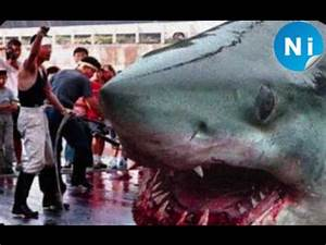 Top 15 Biggest Animals on Planet Earth! - YouTube