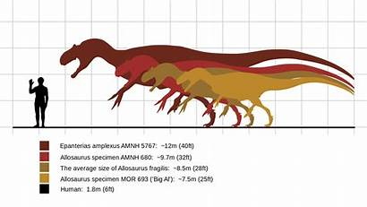 Allosaurus Comparison Human Dinosaur Compared Dinosaurs Prehistoric