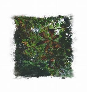 Konifere Wird Braun : pflanzenhof nordshausen august 2011 ~ Lizthompson.info Haus und Dekorationen