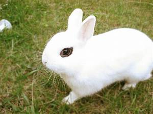 Different Breeds of Dwarf Rabbits | My Dwarf Bunny