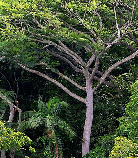 Mehr Bäume Für Den Wald  Panorama  Badische Zeitung
