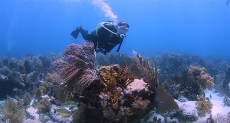 scuba diving  key west florida   underwater