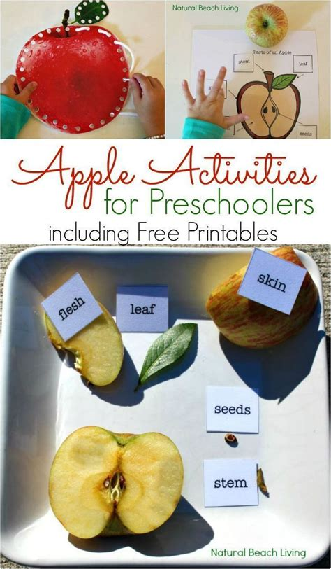 202 Best Fruit Theme Weekly Home Preschool Images On