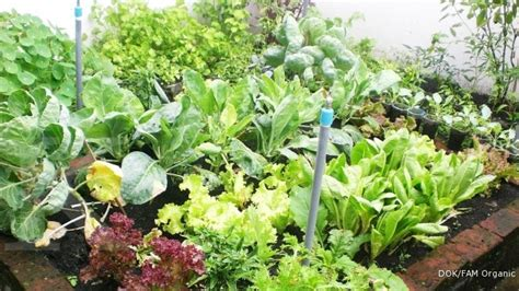 mengolah kebun  rumah  modal murah