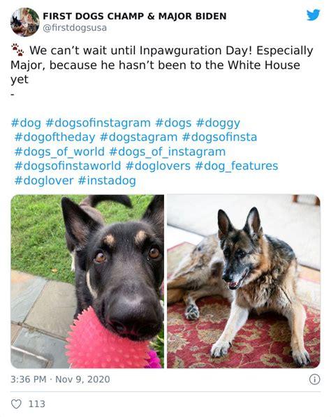 Joe Biden's Dogs Have Social Media Accounts And The ...