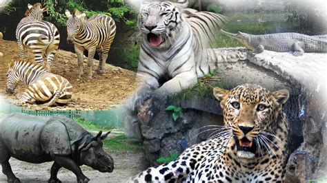 Zoological Garden A Journey To Kolkata Alipore Zoological Garden Part I