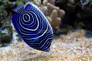 Deep Blue Sea Fish