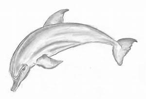 Dolphin by Emka1110 on DeviantArt