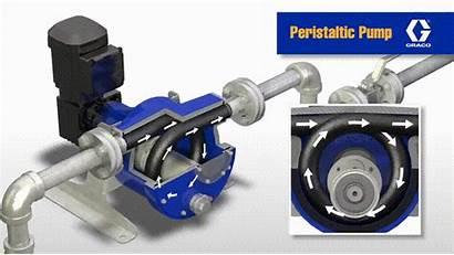 Peristaltic Pumps Pump Cavity Operation Progressive Advantages