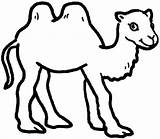 Camel Coloring Humped Drawing Template Pages Outline Printable Clipart Getdrawings Clipartmag Sketch Getcoloringpages sketch template